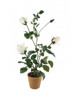 Kwiat-99_23